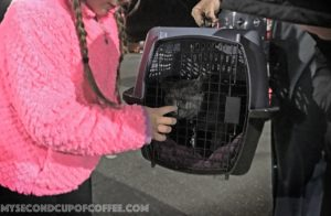 touching cat's nose in pet carrier