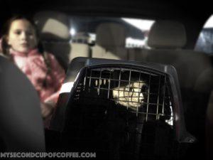 kitten in a carrier in the car
