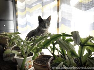 Cat safety plants