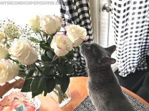 cat safety roses
